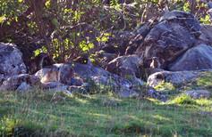 marmottes-morzine.jpg