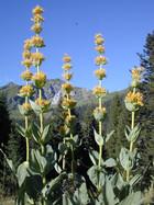 fleurs-vallee-manche.jpg