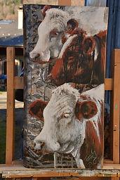 Triplette de jeunes vaches qui se tiennent en rang serré.