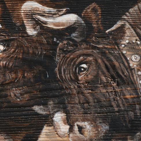 Portrait de vaches