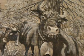 Détail de 2 vaches d'Hérens