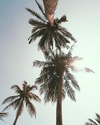 low-angle-photography-of-coconut-trees-u