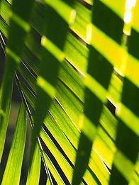 green-palm-tree-leaf-3663308.jpg