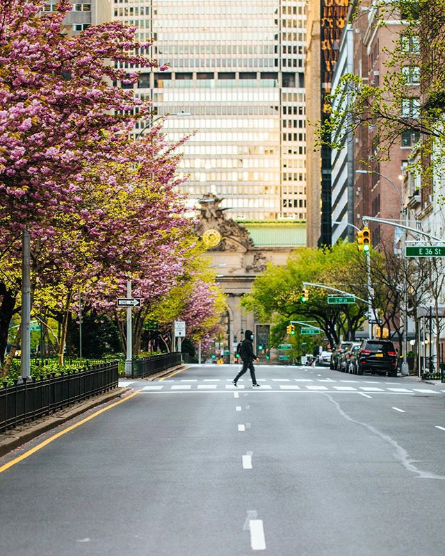 Park Avenue and 35th Street, Murray Hill, New York