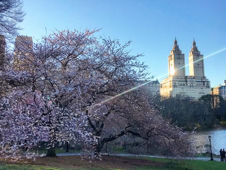 Central Park after work...