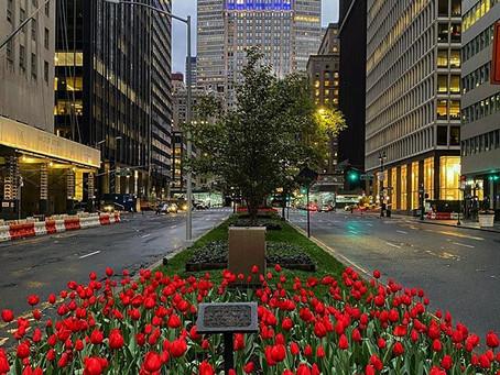 Tulips on Park Avenue!