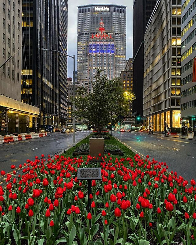 Park Avenue and 50th Street - Tulips in New York
