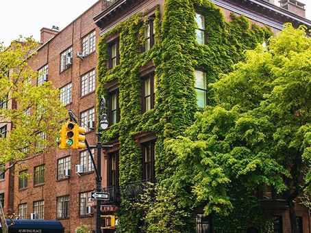 Townhouses and buildings covered by green leaves!