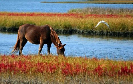 Pferdwasser.jpg