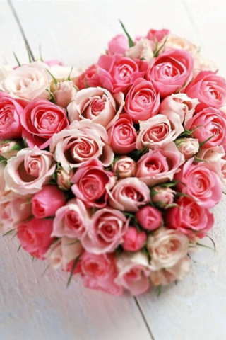 Beautiful Mixed Rose