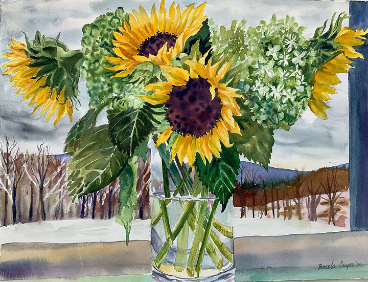 Snowfall Sunflower