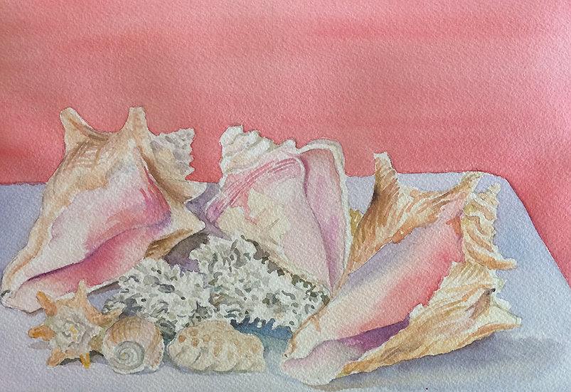 Bahamian Shells