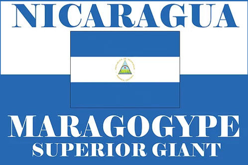 café maragogype du nicaragua