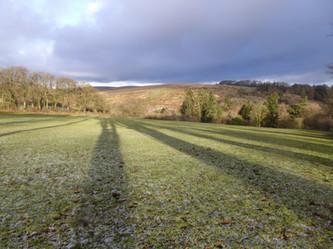 Tree shadows 5 Jan 2016.JPG