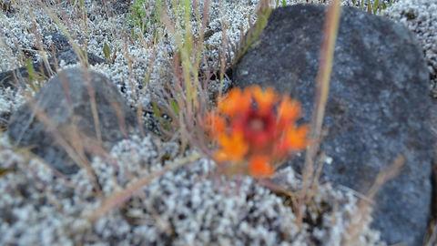 Flora del Parque Nacional Laguna del Laja