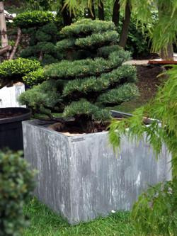 Jardinière zinc - titan & Niwaki