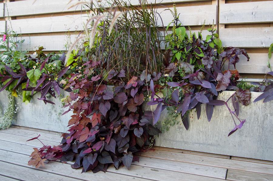 Jardinière zinc sur terrasse bois