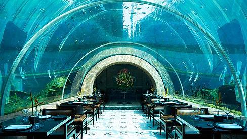 koral2.jpg