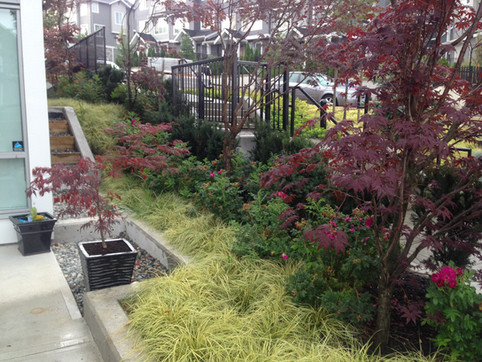 Side yard planting design at the Grandview townhome. Client: Adera Developments Part of the landscape design as Project Manager for Jonathan Losee Ltd.