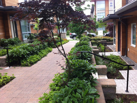 Hardscape and planting design at the Breeze townhome. Client: Adera Developments Part of the landscape design as Project Manager for Jonathan Losee Ltd.