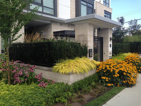 Front entry planting design at the 4th and Highbury apartments. Client: South Street Development Part of the landscape design as Project Manager for Jonathan Losee Ltd.