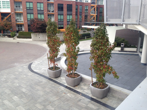 Hardscape and planting design at the Port Royal apartments. Client: Aragon Development Part of the landscape design as Project Manager for Jonathan Losee Ltd.