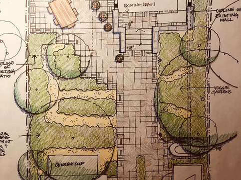 A sketch for a back yard patio area and urban farm.