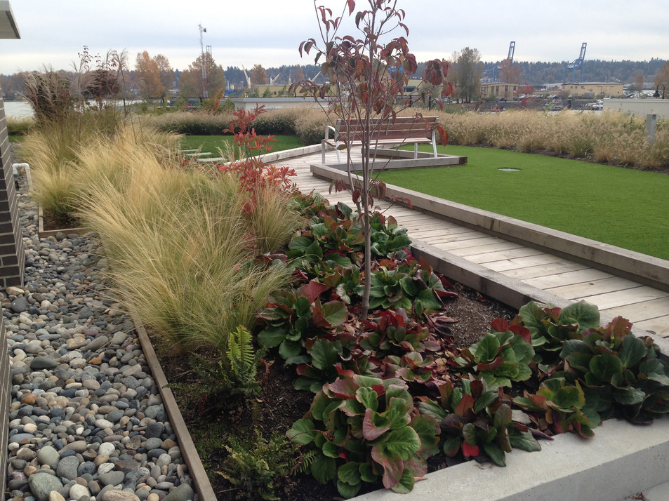 Rooftop planting and boardwalk design at the Port Royal apartments. Client: Aragon Development Part of the landscape design as Project Manager for Jonathan Losee Ltd.