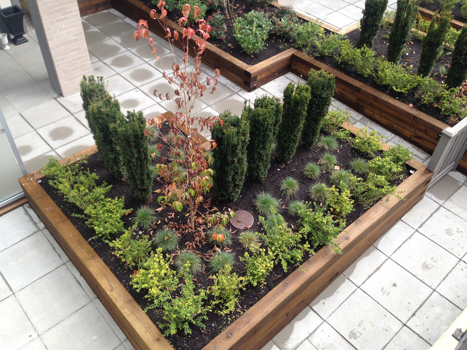 Shared back yard planting design at the Seasons townhome. Client: Ledingham McAllister Developments Part of the landscape design as Project Manager for Jonathan Losee Ltd.