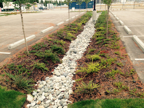 Biofiltration planting design for a net-zero stormwater infiltration at an industrial site. Client: Hopewell Develoments. Part of an overall site design as Project Manager for Jonathan Losee Ltd.