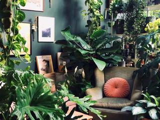 Estilo Decor - Urban Jungle - O ponto de equilíbrio