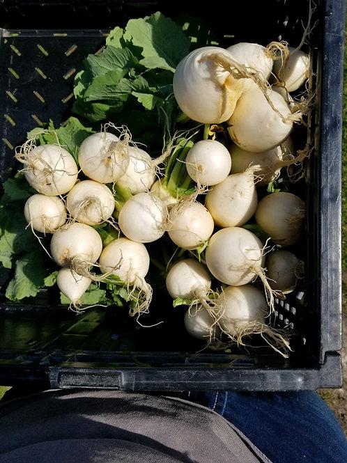 Hakurei Salad Turnips