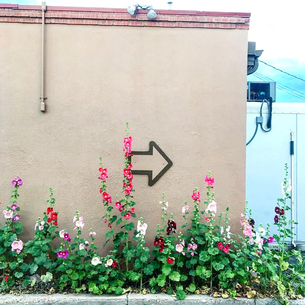 Be resilient like the hollyhock by Pete Gurule of Resonance Massage and Bodywork in Santa Fe