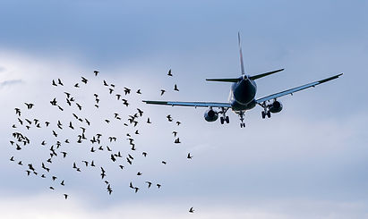 flock-birds-front-airplane-airport-conce