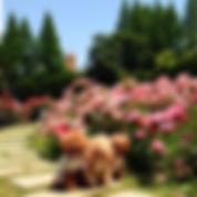 大阪 公園 わんこ 像 人物 WNS45 わんどらいぶ わんドライブ ワンドライブ 犬 猫 保護