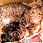 保護猫,保護施設,動物愛護,WNS45,wns45,わんドライブ,ワンドライブ,わんどらいぶ,寄付,支援,里親