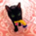 保護猫,捨て猫,野良猫,里親,幸せ,WNS45,wns45,わんドライブ,幸せ物語