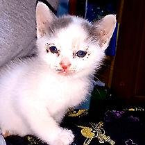 保護猫,WNS45,wns45,わんドライブ,保護施設,動物愛護,寄付