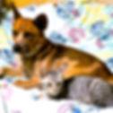 保護犬,WNS45,wns45,保護施設,動物愛護,わんドライブ,幸せ物語