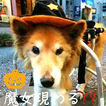 保護犬,保護施設,WNS45,wns45,わんドライブ,ハナ,横浜,元町