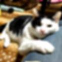 保護施設,保護猫,保護犬,WNS45,wns45,ワンドライブ,わんドライブ,わんどらいぶ,里親,ボランティア,寄付