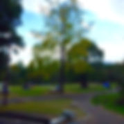 滋賀 琵琶湖 皇子が丘公園 WNS45 わんどらいぶ わんドライブ ワンドライブ 犬 猫 保護