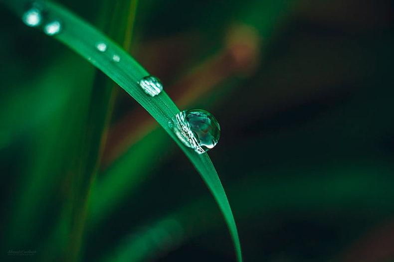 macro-nature-water-water-drops-wallpaper