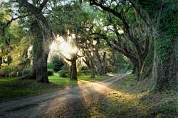 Image_Trees_Mandala
