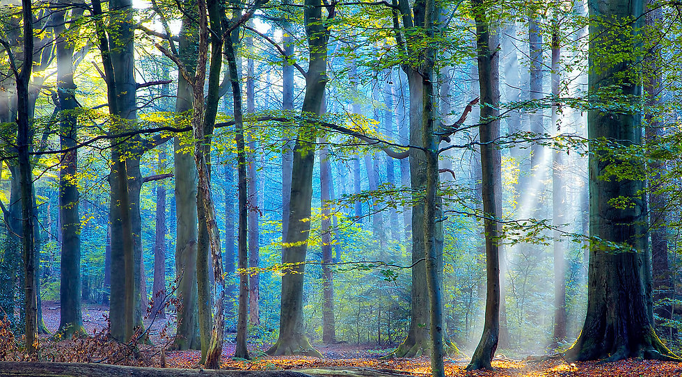 the-enchanted-forest.jpg