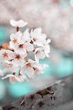 beautiful-bloom-blooming-2076494.jpg