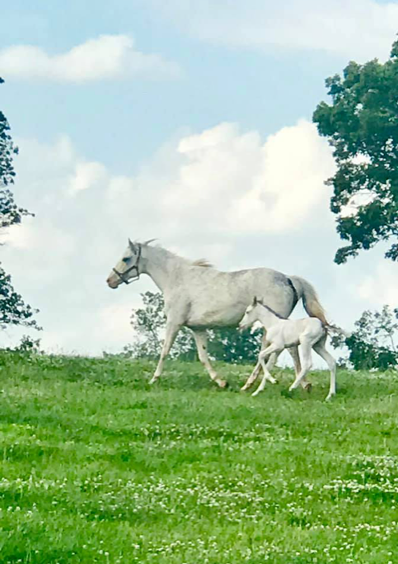 Mare and foal.png