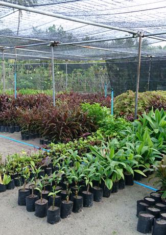 Alba Landscapes Nursery.JPG