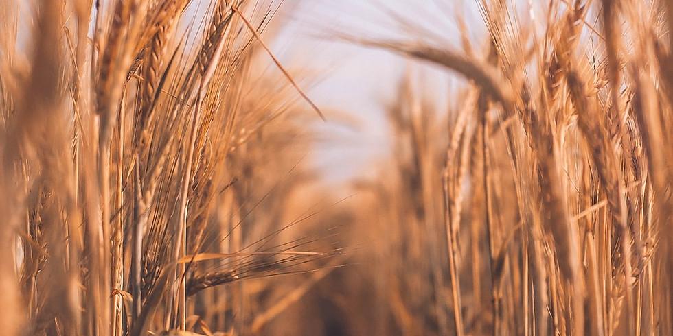 BKS Webinar: Agribusiness Group Webinar