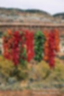 Red Peppers Website Image.jpg